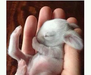 bunny, cute, and baby image