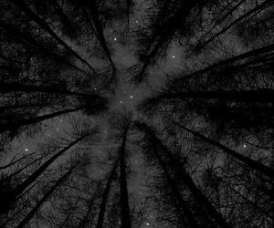 stars, night, and tree image