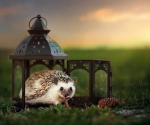 hedgehog and lanterns image