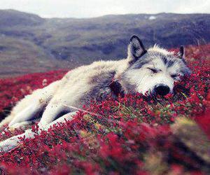 animal, beautiful, and dog image