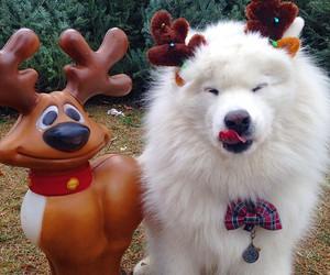 adorable, dog, and festive image