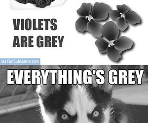 funny, dog, and roses image