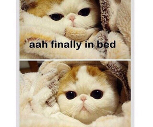 funny, cat, and true image
