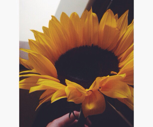 flower, photography, and sunflower image