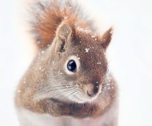 cute, squirrel, and snow image