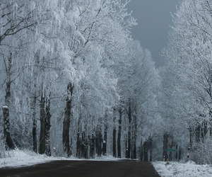 road, snow, and trees image