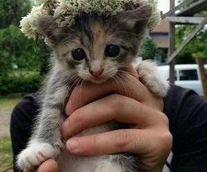 adorable, animal, and flower crown image