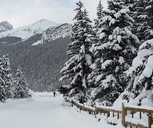 pine, snow, and winter image