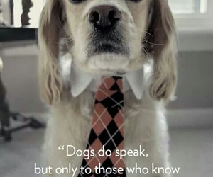 dog and listen image