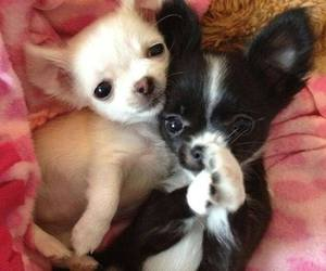 dogs, baby animals, and cute animals image