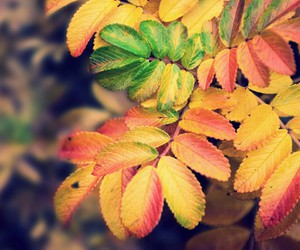 beautiful, colors, and leafs image