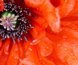 beautiful, flower, and drops image