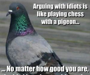idiot, pigeon, and chess image