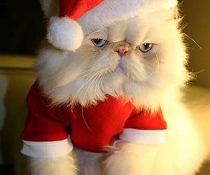 cat, christmas, and santa image