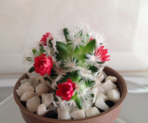 cactus, flowers, and cam image