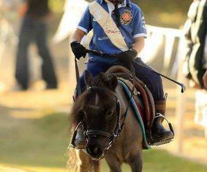 Animais, cavalo, and beautifull image