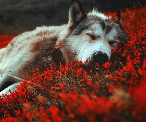flowers, dog, and wolf image