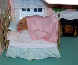 animal, dollhouse, and hamster image