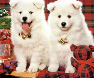 dogs wallpapers, animals hd wallpapers, and dogs hd wallpapers image