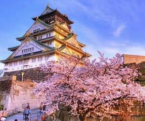 japan, osaka, and sakura image