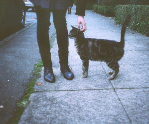 cat, indie, and grunge image
