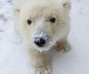 bear, Polar Bear, and cute image