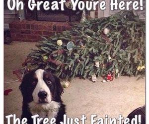 funny, dog, and christmas image