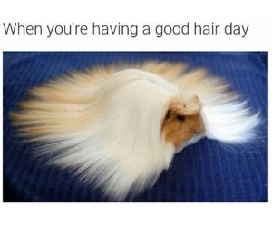 funny, hair, and good image