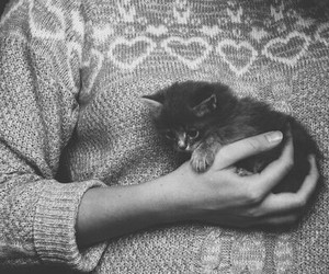 adorable, hipster, and kitten image