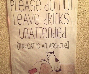 cat, funny, and drink image