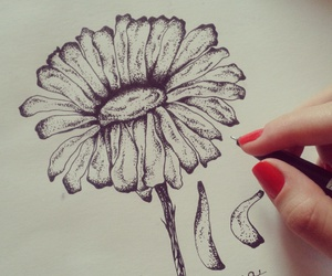 flower and sketch image