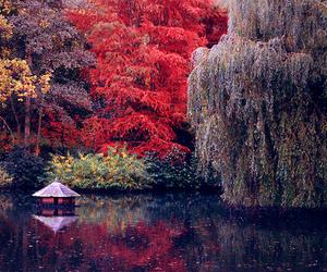 lake and tree image