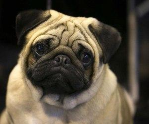 animal, black, and dog image