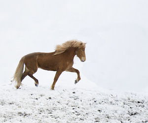 horse, iceland, and winter image
