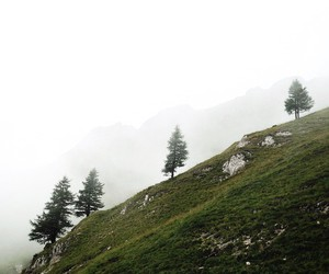 fog, green, and photo image