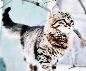 cat, winter, and snow image