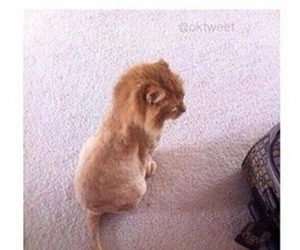 simba, cat, and funny image