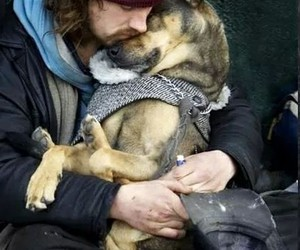 dog, love, and friends image