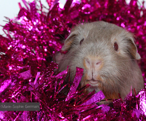 animals, pets, and sparkle image