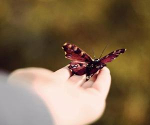 air, butterfly, and hand image