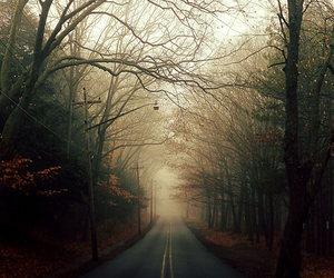 photography, road, and forest image