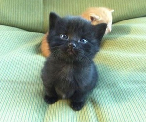 animals, black, and cute image