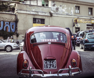 beetle, classic, and front view image
