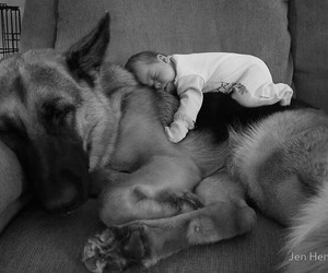 baby, german sheperd, and couch image