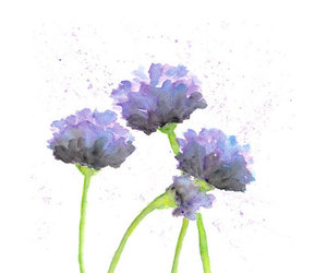 flowers, poppy, and watercolor image