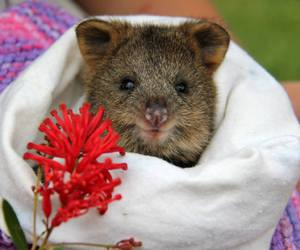 australia, baby animals, and cute animals image
