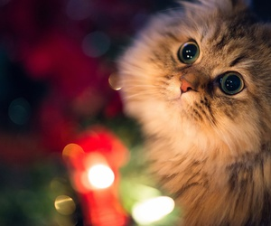cat, animal, and christmas image