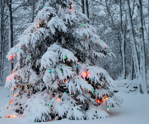 christmas, winter, and snow image