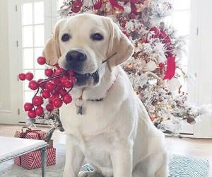 dog, christmas, and white image