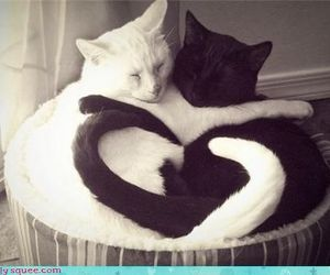 cats, family, and heart image